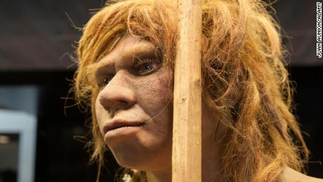 Neanderthal fathers were younger than Homo sapiens, but mothers were older, study says