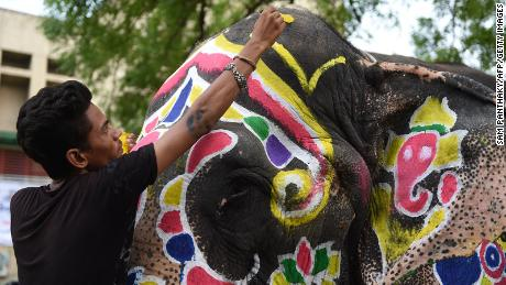 An Indian elephant is painted in advance of the annual Hindu festival 'Rath Yatra' in Ahmedabad, in Gujarat, on July 3, 2019.