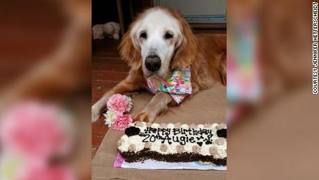 Augie received a dog-friendly carrot cake for her birthday.
