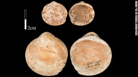 การศึกษาใหม่พบว่ามนุษย์สวมสร้อยคอที่ทำจากเปลือกหอยเมื่อกว่า 120,000 ปีก่อน
