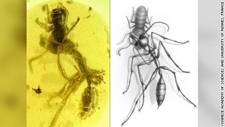 Prehistoric 'hell ants' hunted their prey with unusual headgear