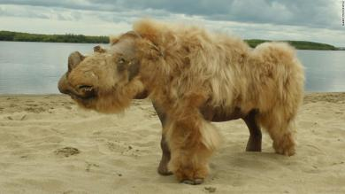 A 14,000-year-old puppy munched on a woolly rhino for its last meal, stomach contents show