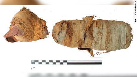 Scientists 'digitally unwrapped' a few Egyptian animal mummies, including a kitten and a cobra
