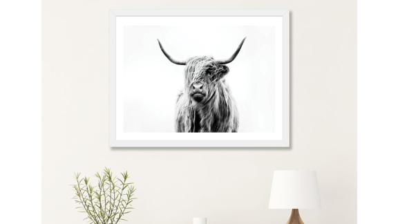 Mercury Row Portrait of a Highland Cow Photograph Print