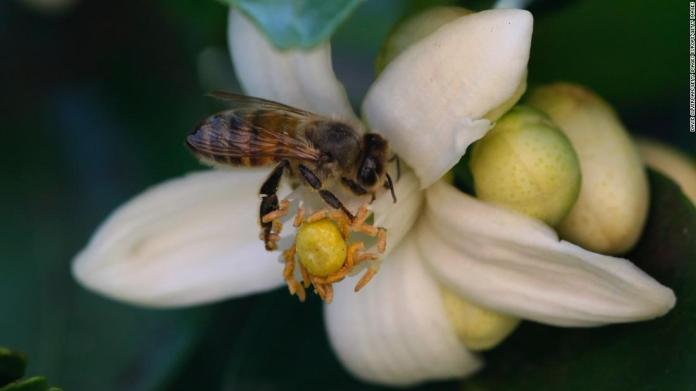 200915104323 honeybee pollinates flower super tease