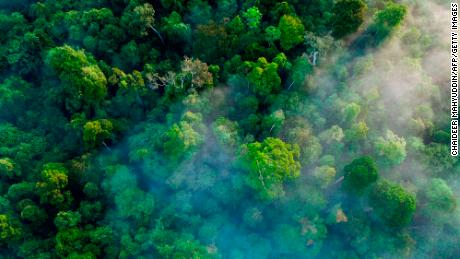 This aerial picture taken from a drone on January 9, 2019 shows trees in the Leuser ecosystem rainforest in the Subulussalam district, Aceh province.