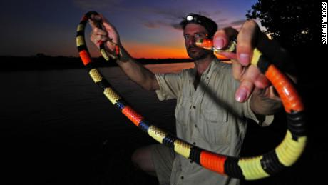 Zoltan Takacs holds up an Amazon coral snake. Proteins from the venom of snakes and other animals are being used to develop drug therapies.