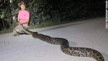 Pythons might become a new menu item in Florida if scientists can confirm they're safe to eat