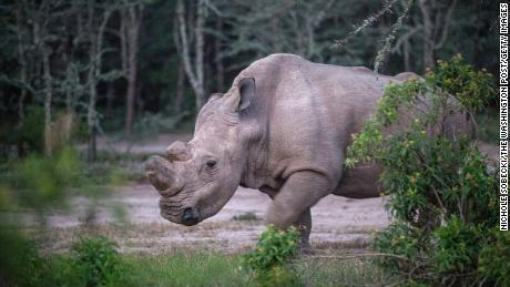 Sudan lived alone in a 10-acre enclosure with 24-hour guards.