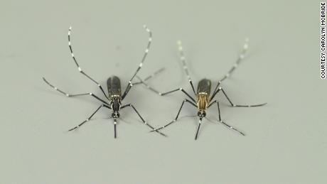Understanding how mosquitoes smell humans can save thousands of human lives