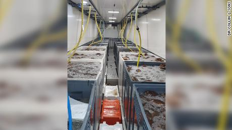 A DR Collin & Sons shipment of seafood destined for France worth more than $200,000. The company has lost more than 90% of its revenue since post-Brexit trading arrangements came into effect.