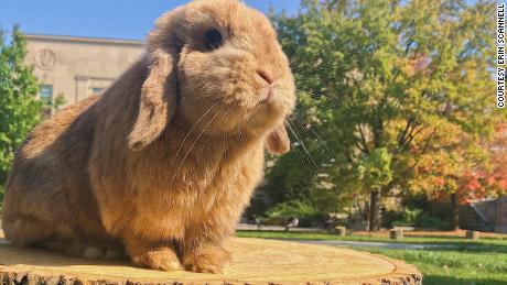 Meet the bunnies that helped people survive 2020