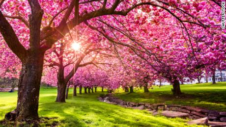 Spring, the most inspiring of the seasons (this year especially)