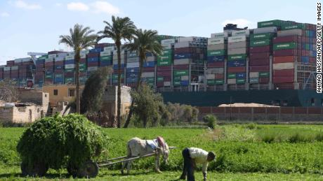 A farmer in the northeastern Egypt city of Ismailiya harvests pasture for cattle in front of the stranded Ever Given container ship, operated by the Taiwanese company Evergreen Marine.