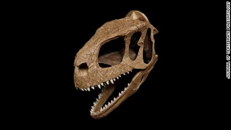 This T. rex lookalike had an unusual skull.