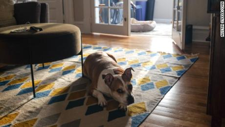 Keep up the good habits formed during the pandemic, such as taking more walks with your dog. Petey loves walks -- as long as there are no other dogs nearby.