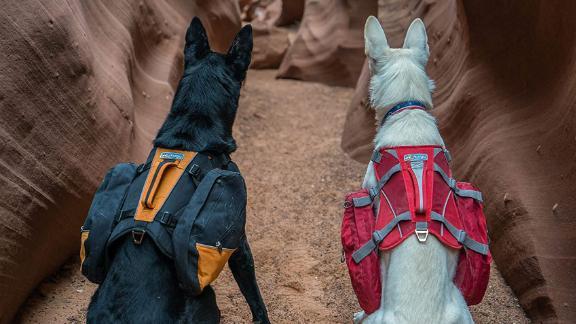 Kurgo Baxter Backpack Harness