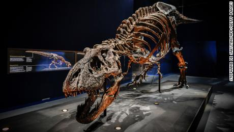 This 67-million-year-old skeleton of a Tyrannosaurus rex was discovered in 2013 and is one of the most complete ever found.