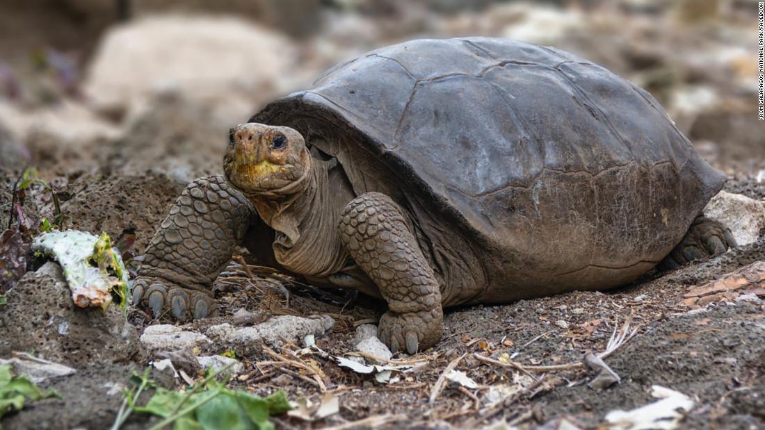 210526215843 extinct turtle galapagos super tease
