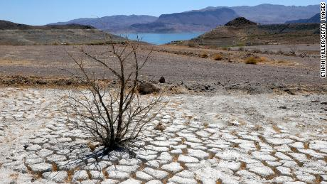 Lake Mead is seen in the distance behind a dead creosote bush in an area of dry, cracked earth that used to be underwater, near where the Lake Mead marina was once located.