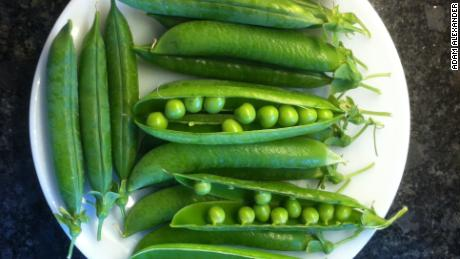 The Avi Joan pea was given to Adam Alexander by Jesus Vargus. This tasty variety was bred by Vargus' grandfather and named after his grandmother, Avi Joan.