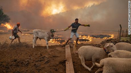 A man guides his livestock away from an advancing fire on August 2 in Mugla, Marmaris district, as the European Union sent help to Turkey and volunteers joined firefighters in battling days of violent blazes.