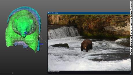 A 3-D model of a bear known as Walker shown next to a picture of the bear at Katmai National Park and Preserve's Brooks Falls.