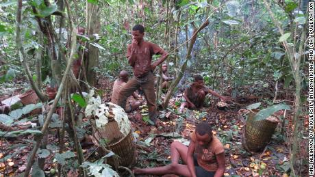 The Baka people, usually hunter-gatherers, forage for mushrooms in the forest.