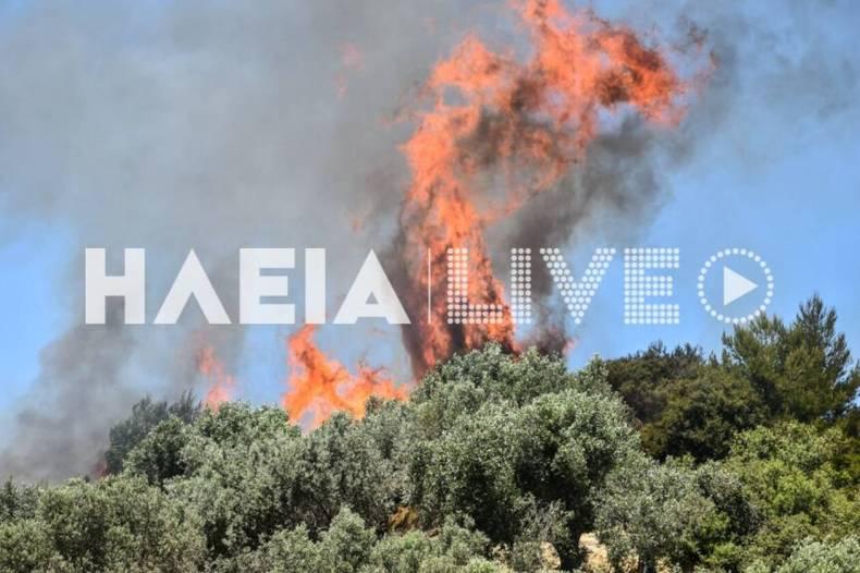 https://cdn.cnngreece.gr/media/news/2021/05/22/266944/photos/snapshot/fotia_vroxitsa-8.jpg