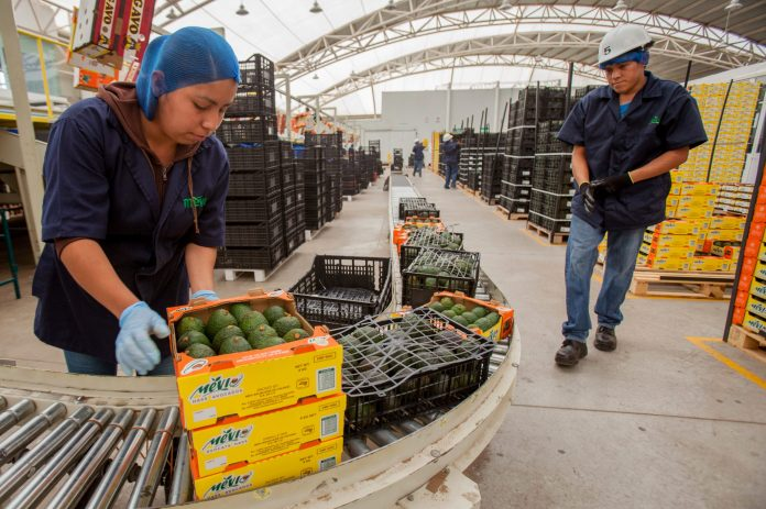 A box of avocado is worth almost five times more than a barrel of oil