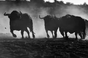 bitcoin bulls at critical point