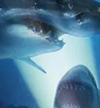 The Scariest Shark Movies That Aren't 'Jaws'