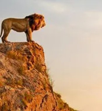 New 'The Lion King' Images Offer a Closer Look at Disney's Remake