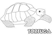 Imagenes De Tortugas Marinas Para Colorear Dibujos De