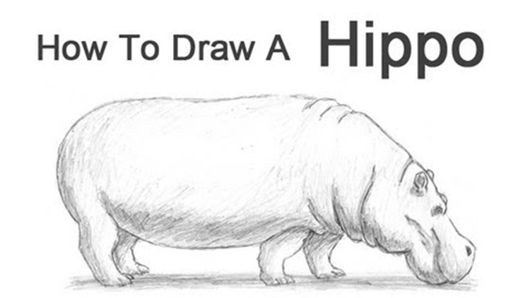 How To Draw Animals 50 Free Tutorial Videos To Help You Learn Step By Step
