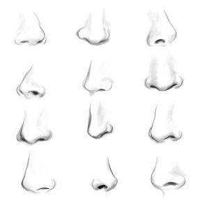 nose draw simple drawings