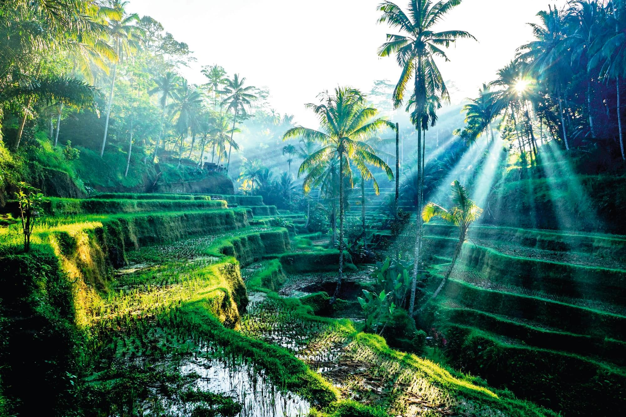 All Inclusive Holidays to Bali 2018 / 2019 | Thomson now TUI