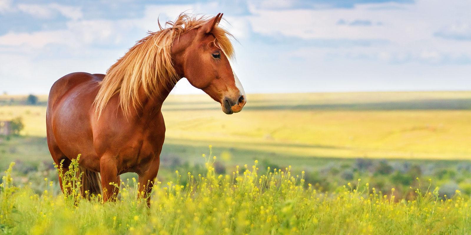 Un cavallo per amico  Cose di Casa