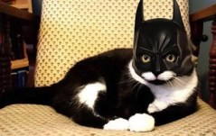 Image result for halloween costumes for tuxedo cats