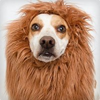 74 Genius Dog and Owner Costumes | Costume Yeti