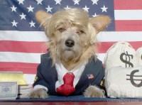 Barney the Billionaire Dog Costume   Costume Yeti