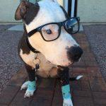 Barney the Billionaire Dog Costume | Costume Yeti