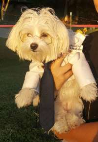 "Adorable ""Dogstein"" Costume   Costume Yeti"