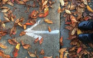 Arrow. Photo by Linda Naiman