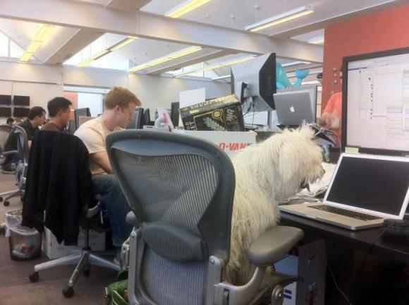 Mark Zuckerbergs Dog Blogs From A MacBook Pro At Facebook