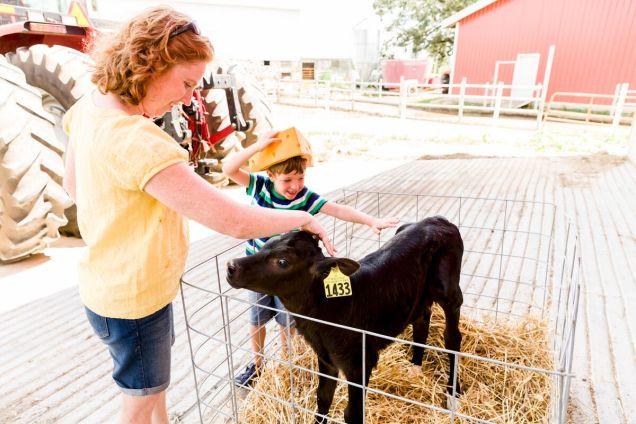 Stefani y Myles acarician una vaca en una granja lechera en Wisconsin.