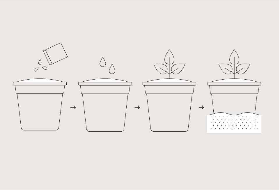 Garden Drop-In Kit - Popcorn
