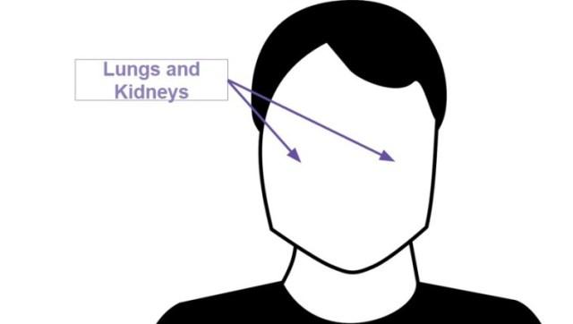 lungskidneys