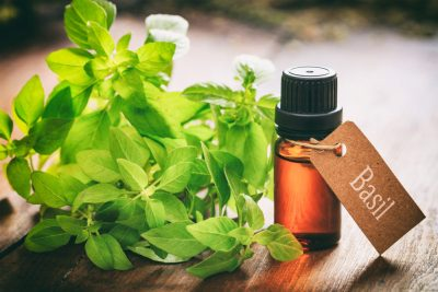 Basil Oil:  For Staph Infection Remedy