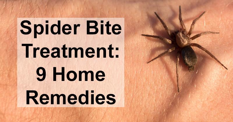 Spider Bite Treatment: 9 Home Remedies - David Avocado Wolfe